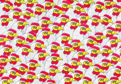 Hühner-Massentierhaltung