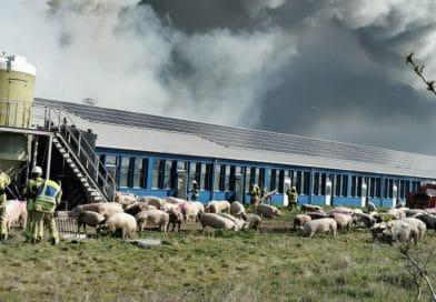BRand in einer Schweinemastanlage Bild zur Veranschaulichung