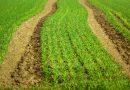 88.000 Quadratmeter fruchtbarer Boden sollen für einen Rüstungskonzern geopfert werden