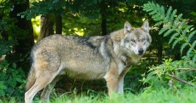 Wolfsfreie Zonen