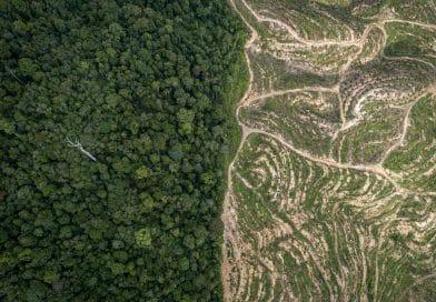 Regenwald im Einkaufskorb